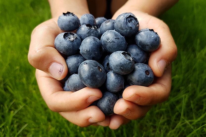 Arándanos, frutas del bosque