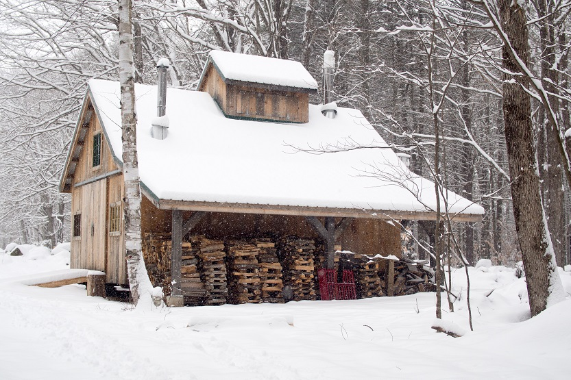 Bosque de arces Canadá - Unsplash Mike Petrucci