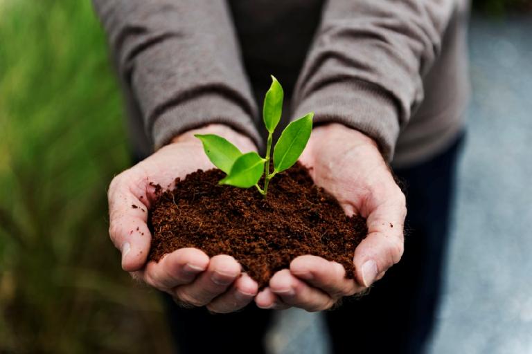Cultivo de hierbabuena - Rawpixel