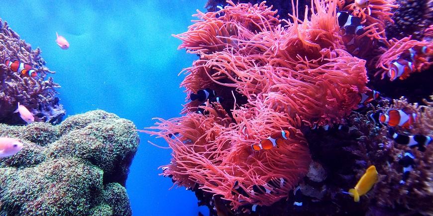 Anémonas marinas-unsplash