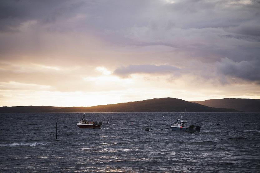 Pesca de tilapia salvaje - Unsplash