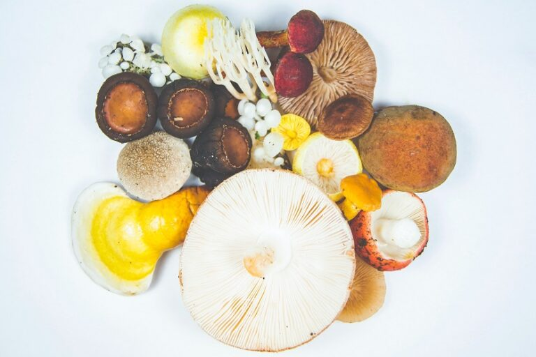Reishi y otros hongos - Unsplash Timothy Dykes