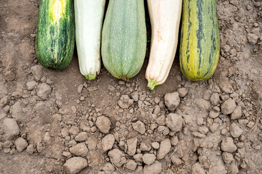 Lee más sobre el artículo Calabacín, una verdura muy versatil
